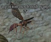 File:A poisonous hood wasp.jpg