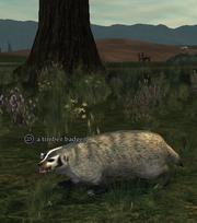 A timber badger