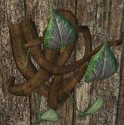 Wild hanging vine (Visible)