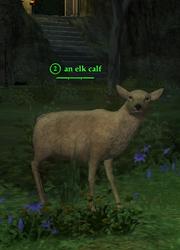 An elk calf