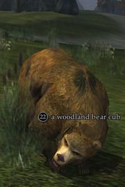 A woodland bear cub