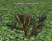 Steamfont wild radish