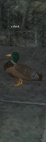 File:A duck (CH).jpg