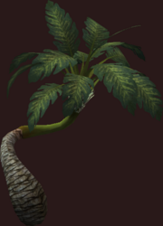 Twisted Palm Tree (Placed)