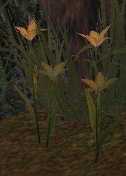 Maraflowers