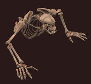 Petamorph Wand Deathdragger Orc (Visible)