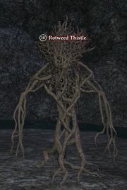 Rotweed Thistle