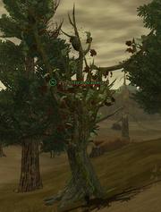 A petrified deadwood