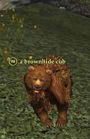 A brownhide cub