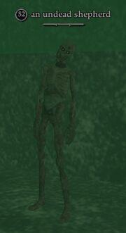 An undead shepherd