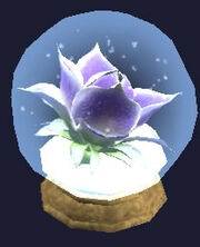 Preserved Bloom Examine