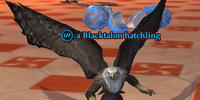 A Blacktalon hatchling