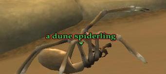 File:A dune spiderling.jpg