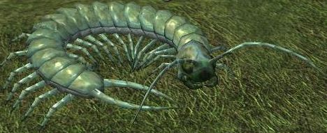File:Race centipede.jpg