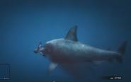 Tiburón atacando GTA V