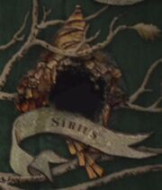 Sirius borrado.jpg