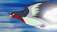EP658 Swellow de Ash usando ataque rápido.png