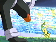EP273 Bayleef de Ash vs Houndoom de Harrison.png
