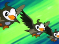 EP472 Starly usando doble equipo.png