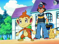 Archivo:EP524 Chimchar listo para combatir.png