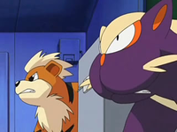 Archivo:EP565 Growlithe y Stunky.png