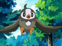 Archivo:EP482 Starly de Ash.png
