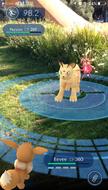 Pokémon GO Combate fondo real