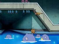 Archivo:EP578 Comunidad e Pokémon (3).png