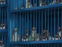 Archivo:EP482 Jaulas con Pokémon.png