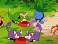 Archivo:EP010 Caterpie, Oddish y Rattata.png