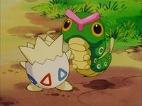 Archivo:EP163 Togepi con un Caterpie.png