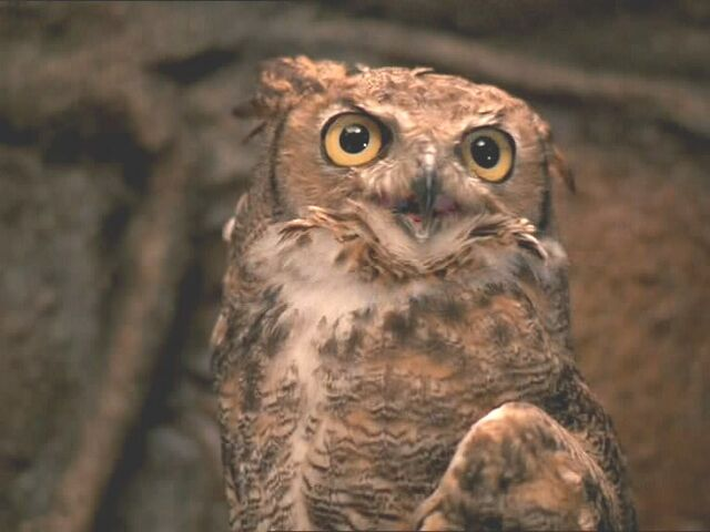 Archivo:Lograys owl.jpg