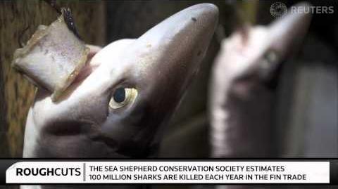 Shark fin operation on Hong Kong rooftop angers activists - Rough Cuts