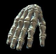 Right hand bones