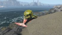 FO4Mirelurk feeding on sea creature