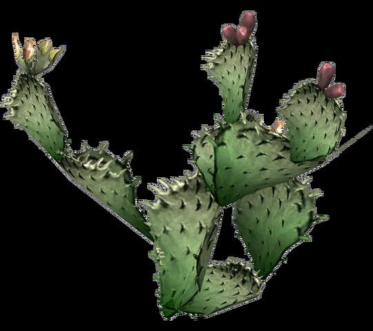 File:Prickly pear cactus.png