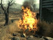 Burned wastelander
