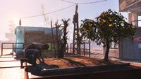Fallout4 WastelandWorkshop03