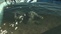 Gatorclaw in water.png