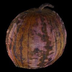 Institute gourd