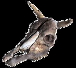 Brahmin Skull