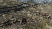 Fo4 Three dead raiders
