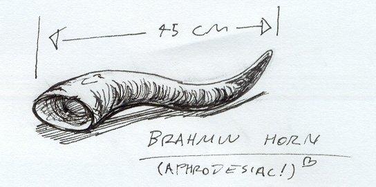 File:Brahmin Horn.jpg