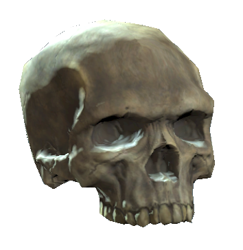 File:Upper skull.png