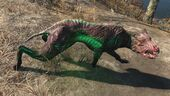 FO4 Glowing mongrel