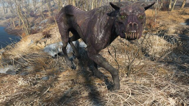 File:FO4 Rabid mongrel.jpg