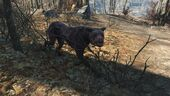 FO4 Wild mongrel