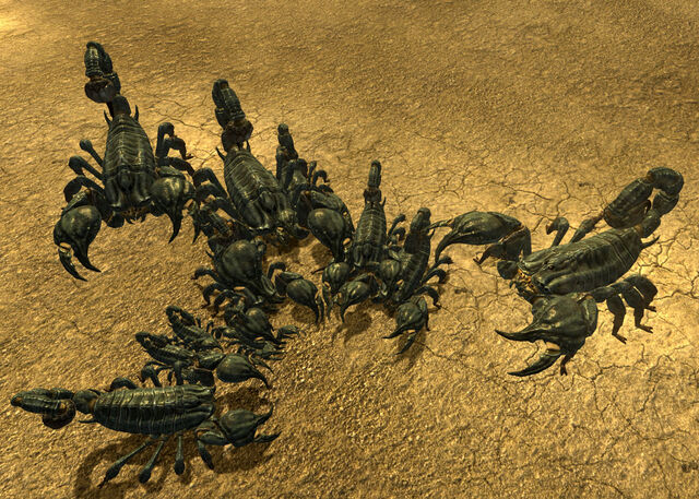 File:Scorpions at burrow.jpg