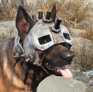 Dog helmet worn