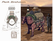 Brahmin CA1
